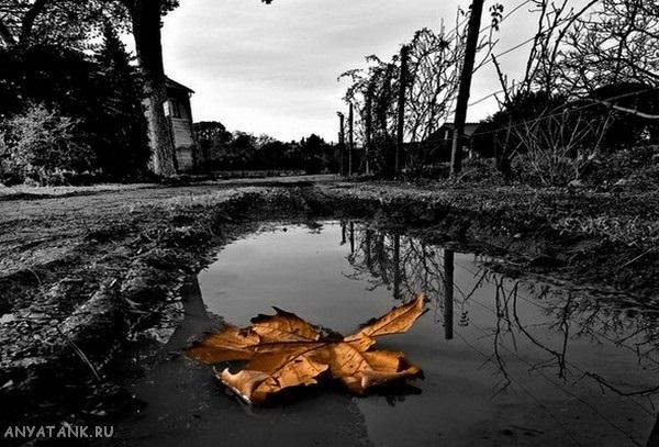 черно белые картинки на тему осень 016