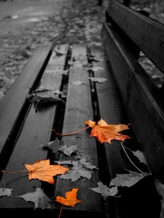 черно белые картинки на тему осень 018