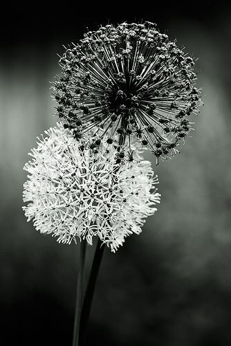 черно белые картинки на тему осень 019