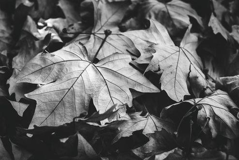 черно белые картинки на тему осень 021