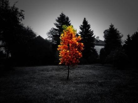 черно белые картинки на тему осень 023