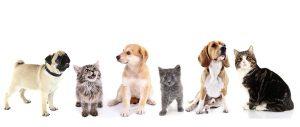 Арты кошки и собаки 005