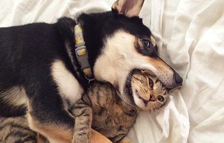 Арты кошки и собаки 006