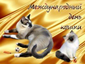 Всемирный день кошек 013