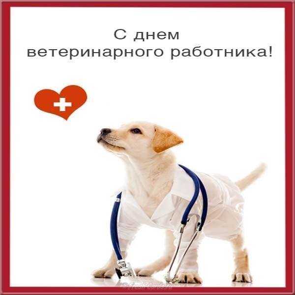 День работников ветеринарной медицины Украины 012