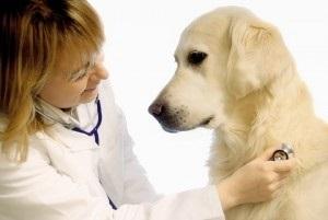 День работников ветеринарной медицины Украины 014