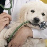 День работников ветеринарной медицины Украины 015