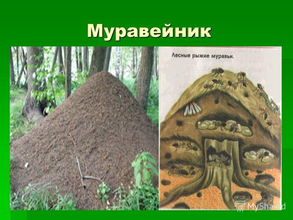 Картинка муравейника для детей 005