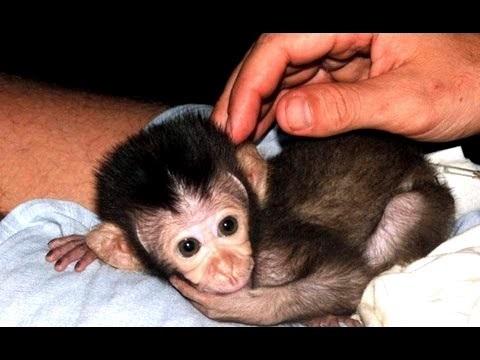 Картинка обезьянки для детей 010