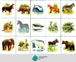 Картинки для детей в мире животных 003