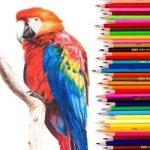 Картинки для детей цветные карандаши