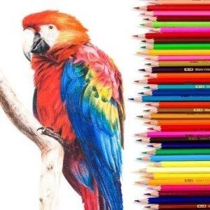 Картинки для детей цветные карандаши 008