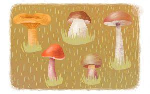 Картинки лес грибы ягоды для детей 010