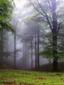 Картинки природа в лесу   подборка 009