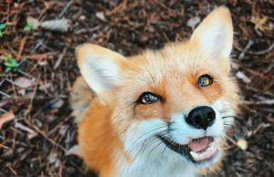 Картинки с домашними и дикими животными (20)