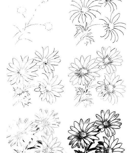 Красивые рисунки растений и цветов (20)