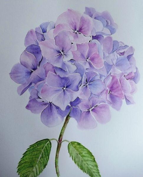 Красивые рисунки растений и цветов (21)