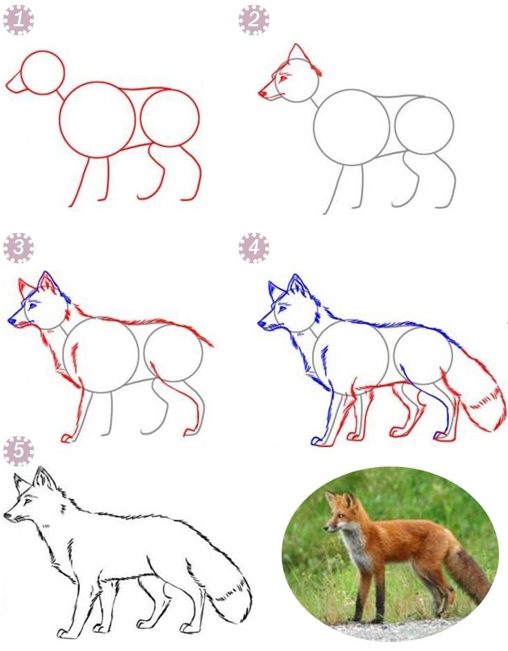 Лиса карандашом картинки для детей 020