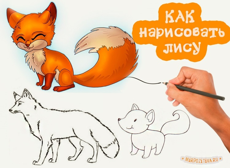 Лиса карандашом картинки для детей 022