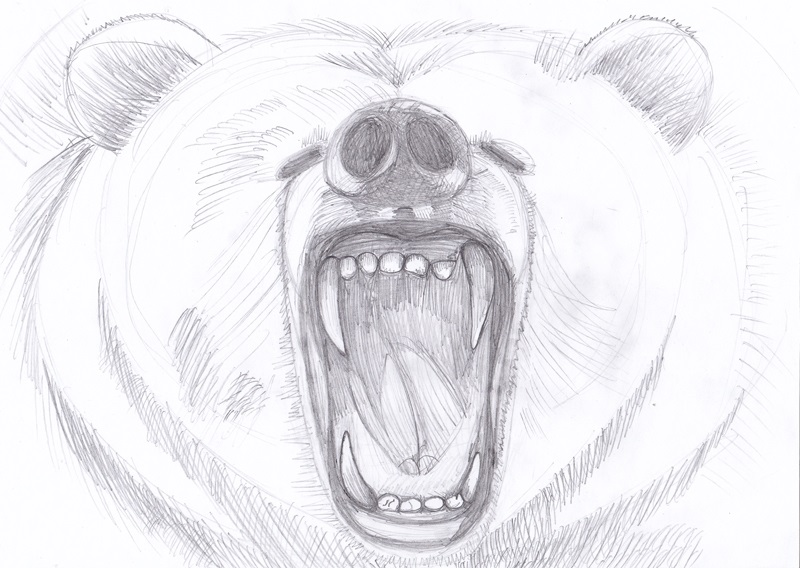 Медведь красивые арты 004