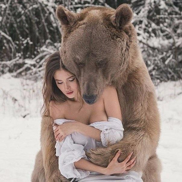 Медведь красивые арты 012