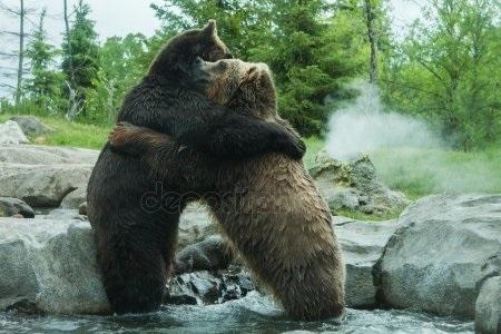 Медведь красивые арты 020