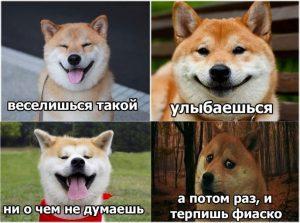 Мемы с собаками 005