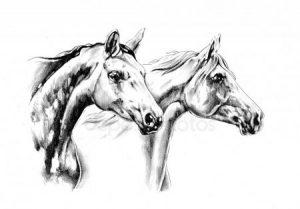 Нарисованные картинки лошадей 006