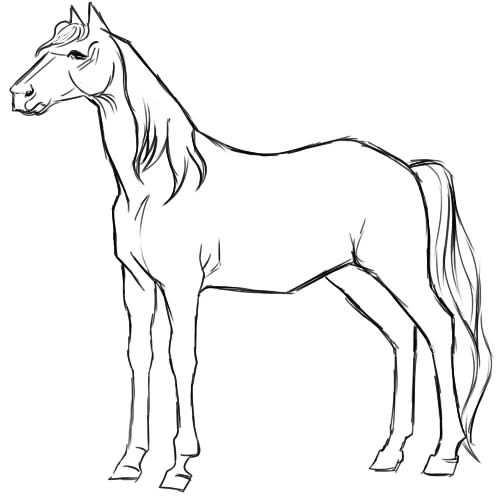 Нарисованные картинки лошадей 007