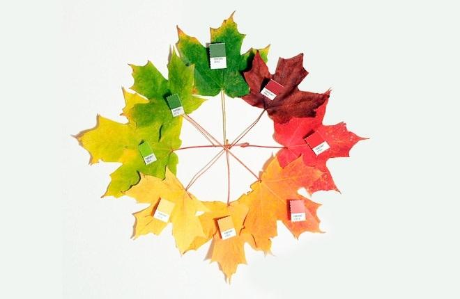 Орнамент из осенних листьев картинки и фото 005