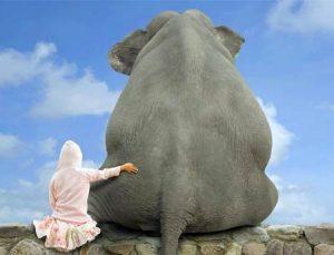 Поздравления в открытках на Всемирный день защиты слонов 018