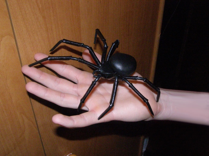 домашний черный паук фото найдете, чем пополнить