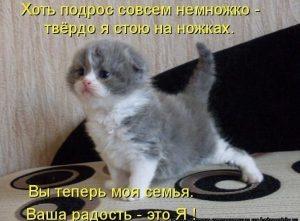 Смешные картинки котят с надписями 008