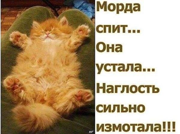 Смешные картинки с надписями про котиков