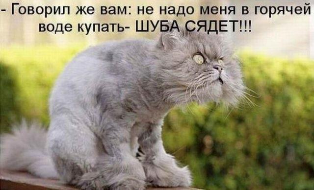 Смешные картинки с надписями про котиков 020