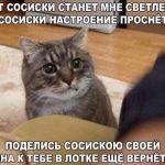 Смешные фото с котами и надписями