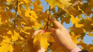 Фото желтые листья осеню 013