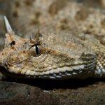 Фото змеи с рогами на голове