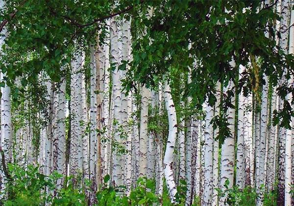 Фото леса летом в хорошем качестве 001