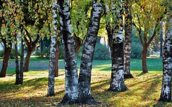 Фото леса летом в хорошем качестве 002