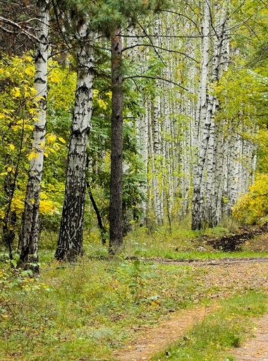 Фото леса летом в хорошем качестве 004