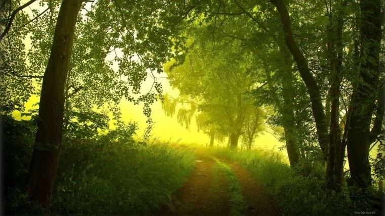 Фото леса летом в хорошем качестве 005