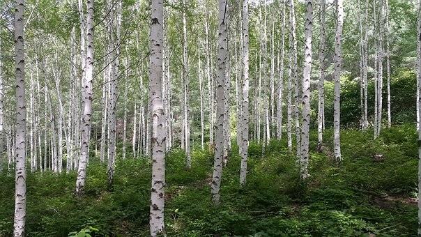 Фото леса летом в хорошем качестве 006