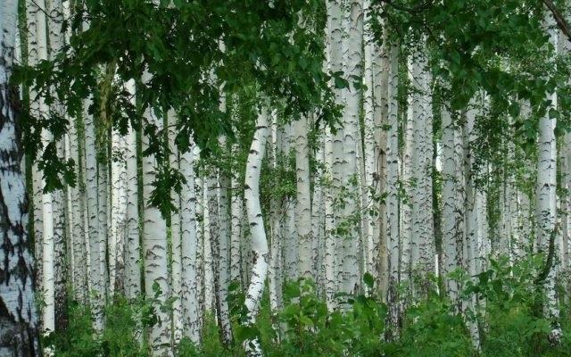 Фото леса летом в хорошем качестве 007