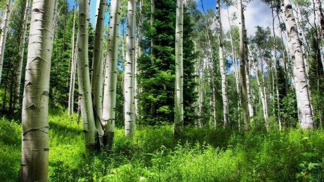 Фото леса летом в хорошем качестве 008