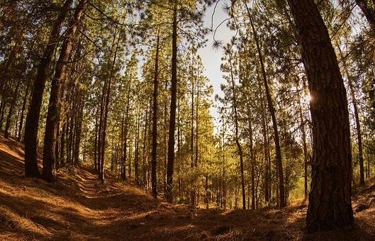 Фото леса летом в хорошем качестве 009