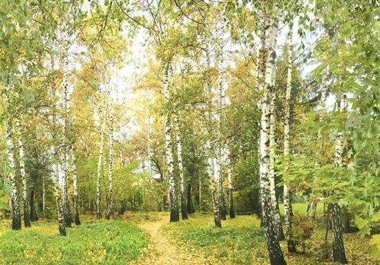 Фото леса летом в хорошем качестве 010