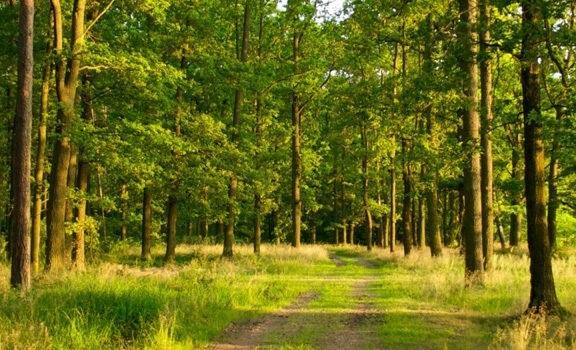 Фото леса летом в хорошем качестве 011