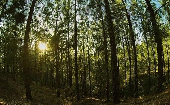 Фото леса летом в хорошем качестве 012