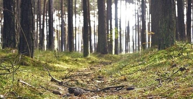 Фото леса летом в хорошем качестве 013